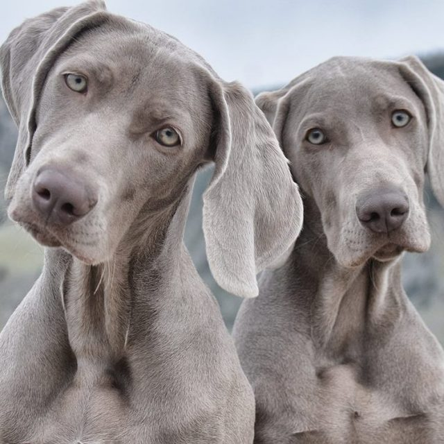 """<span class=""""atmosphere-large-text"""">01</span><span class=""""intro"""">Meet Some Trax Dogs</span>"""