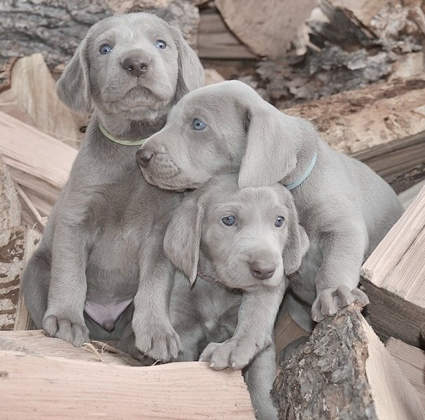 """<span class=""""atmosphere-large-text"""">02</span><span class=""""intro"""">Puppies</span>"""